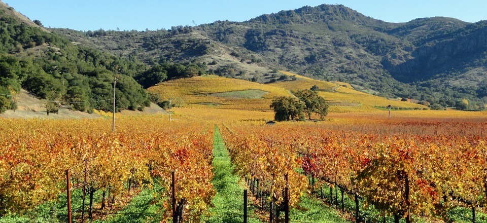 November in Napa Valley